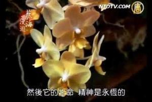 藝海漫遊(95)  詩情花意 中華插花藝術