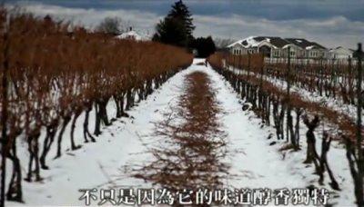 【旅行天下】大自然演繹的傳奇(——加拿大冬季冰酒之旅)