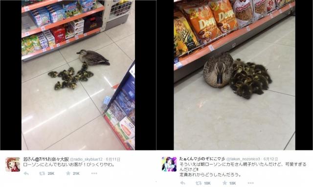 日本一家便利商店出現母鴨帶小鴨光顧,其可愛模樣讓網友印象深刻。(網頁擷圖)