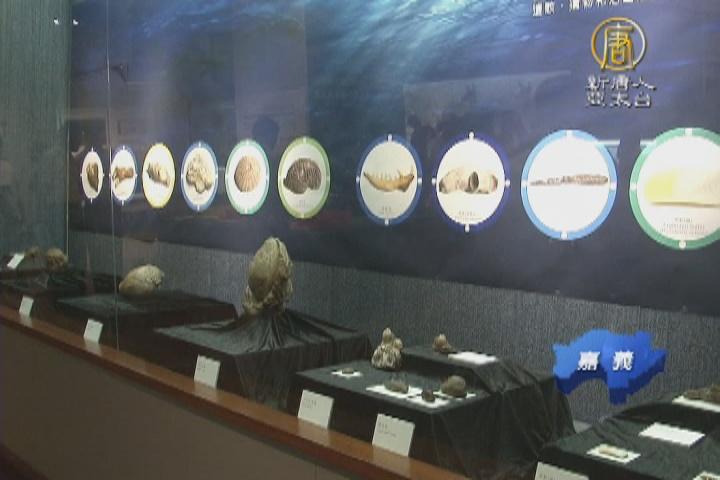 滄海桑田的足跡 嘉義古化石展