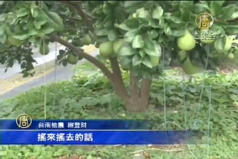昌鴻颱風來襲 中南部農民搶收作物