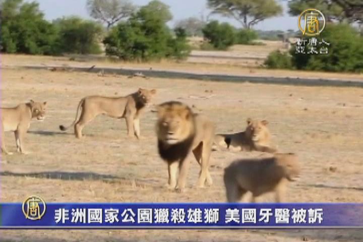 非洲國家公園獵殺雄獅 美國牙醫被訴