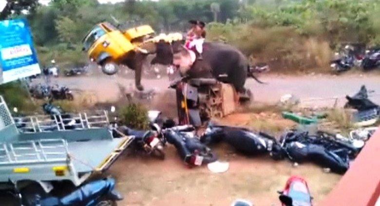 象牙跟象鼻成了大象最佳武器,一牙把三輪車高高抬起