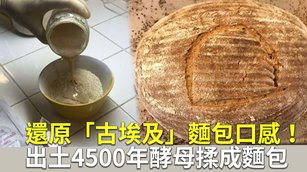 還原「古埃及」麵包口感!出土4500年酵母揉成麵包