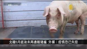 北韓5月底後未再通報豬瘟 外媒︰疫情恐已失控|寰宇掃描