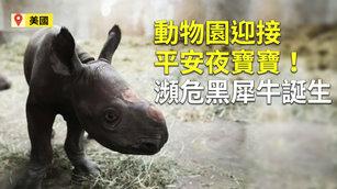 美動物園迎接平安夜寶寶!瀕危黑犀牛誕生