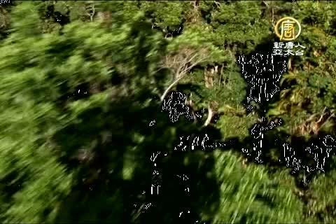 澳洲廣角(522)凱恩斯 熱帶雨林(二)